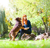 Den eleganta kvinnan har gyckel med hennes stora hund i parkera Royaltyfria Bilder
