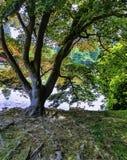 Den engelska hösten med sjön, rays träd och den synliga solen - Uckfield, östliga Sussex, Förenade kungariket fotografering för bildbyråer