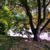 Den engelska hösten med sjön, rays träd och den synliga solen - Uckfield, östliga Sussex, Förenade kungariket arkivbild