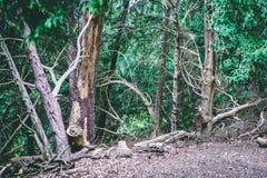 Den engelska skogsmarken parkerar med tyst sikt av grön lövverk arkivbilder