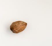 Den enkla avokadot kärnar ur isolerat på en vit bakgrund Royaltyfri Fotografi