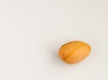 Den enkla avokadot kärnar ur på en vit bakgrund Royaltyfria Foton