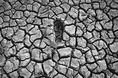 Den enkla avtrycken av en kal mänsklig fot på ett sprucket torkar lerigt under- Royaltyfri Foto