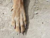 Den enkla hunden tafsar Royaltyfri Bild