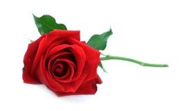 Den enkla röda rosen, lägger ner på den vita tabellen Royaltyfri Foto