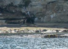 Den enkla skyddsremsan vilar av Rocky Outcropping Royaltyfri Foto