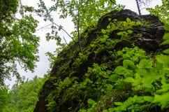 Den enorma våta stenen vaggar bevuxet med växter i sommarbergskog med foliar träd i Gaucasus, Mezmay Royaltyfri Bild