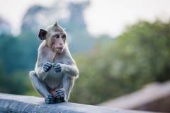 Den ensamma apan väntar på vännen Arkivbild