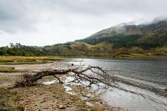 Den ensamma avverkade filialen strandade på fjordkusten Fotografering för Bildbyråer