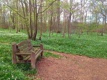 Den ensamma bänken på en natur går en bänk som av naturen omges Arkivbilder
