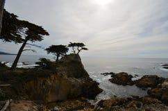 Den ensamma cypressen, hav, kust, himmel, kropp av vatten Royaltyfri Fotografi