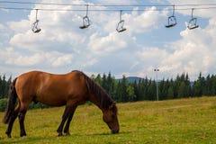 Den ensamma hästen skidar under stolelevatorn Alpint conc för bergsemester Arkivbilder