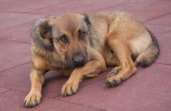 Den ensamma hunden ligger ner i en parkera, Turkiet Arkivbild