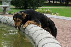 Den ensamma hunden ser kameran royaltyfri bild
