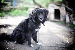 Den ensamma hunden sitter nära dess hund-hus Royaltyfri Fotografi