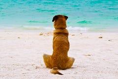 Den ensamma hunden sitter på stranden Royaltyfri Bild
