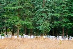Den ensamma kyrkogården sörjer under träd Royaltyfria Bilder