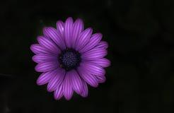 Den ensamma lilablomman arkivfoto