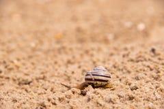 Den ensamma snigeln kryper i sanden efter regn royaltyfri bild