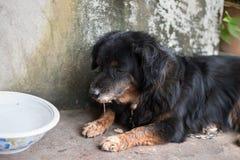 Den ensamma svarta hunden med ledsna ögon är lägga på och vänta någon Royaltyfri Bild