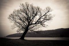 Den ensamma treen arkivfoto