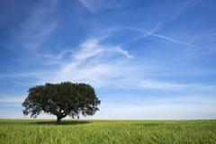 Den ensamma treen fjädrar in landskap royaltyfri fotografi