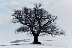 Den ensamma treen i snöig landskap Fotografering för Bildbyråer