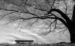 Den ensamma treen i vinter Arkivbild