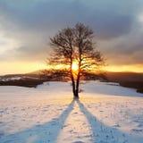 Den ensamma treen på äng på vintern med sunen rays Fotografering för Bildbyråer
