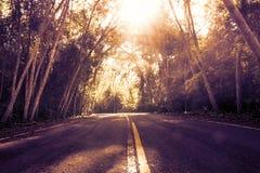 Den ensamma vägen i skogen med solen rays illumining royaltyfria foton