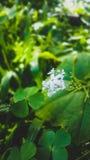 Den ensamma vita blomman arkivbilder
