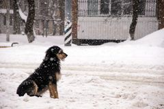 Den ensamma vovvehunden sitter på gatan under tungt snöfall och väntar på hennes förlage royaltyfri fotografi