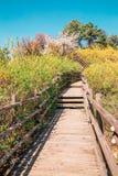 Den Eungbongsan bergvägen med forsythia blommar i Seoul, Koreaa Royaltyfri Bild