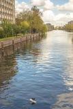 Den Eurasian sothönan står på ett stycke av att sväva plast- kull för polystyren i en kanal i Amsterdam royaltyfri fotografi