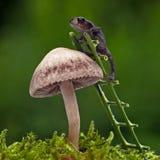 Den europeiska paddan, mm för Bufo bufo 15 behandla som ett barn på svamp Fotografering för Bildbyråer