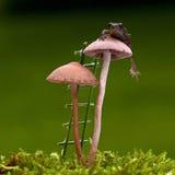 Den europeiska paddan, mm för Bufo bufo 15 behandla som ett barn på svamp Royaltyfria Foton