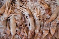 Den europeiska tioarmade bläckfisken fiskar calamaribakgrund Royaltyfri Fotografi