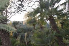 Den Exhuberant skogen av gömma i handflatan royaltyfri fotografi