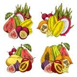 Den exotiska fruktpacken skissar av tropisk produkt Arkivfoto