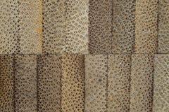 Den exotiska texturmodellen av bambutvärsnittet fyllde med att hårdna emalj Fotografering för Bildbyråer