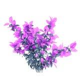 Den exotiska växtbusken med violeten lämnar Arkivbild