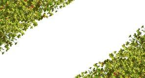 den extra illustratören för ramen för Adobeeps-formatet inkluderar leafen Arkivfoto
