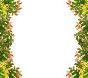 den extra illustratören för ramen för Adobeeps-formatet inkluderar leafen Royaltyfria Bilder
