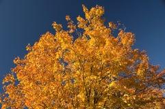 den färgade hösten låter vara treen Royaltyfri Bild