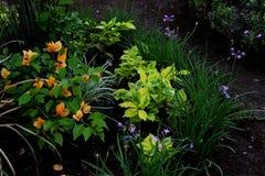 Den färgade persikan blommar i trädgård Fotografering för Bildbyråer
