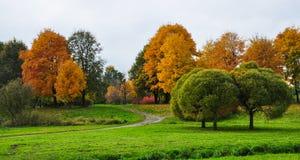Den färgglade guld- hösten parkerar landskap Grön gräsmatta, klippte träd Royaltyfri Foto