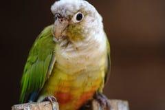 Den färgglade papegojan som finnas i fågeln, parkerar royaltyfri fotografi