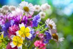Den färgrika ängen blommar sommarbukett I Arkivfoton