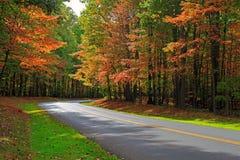 Autumn Forest Road Royaltyfri Fotografi