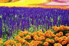 Den färgrika blomman sätter in Royaltyfri Fotografi